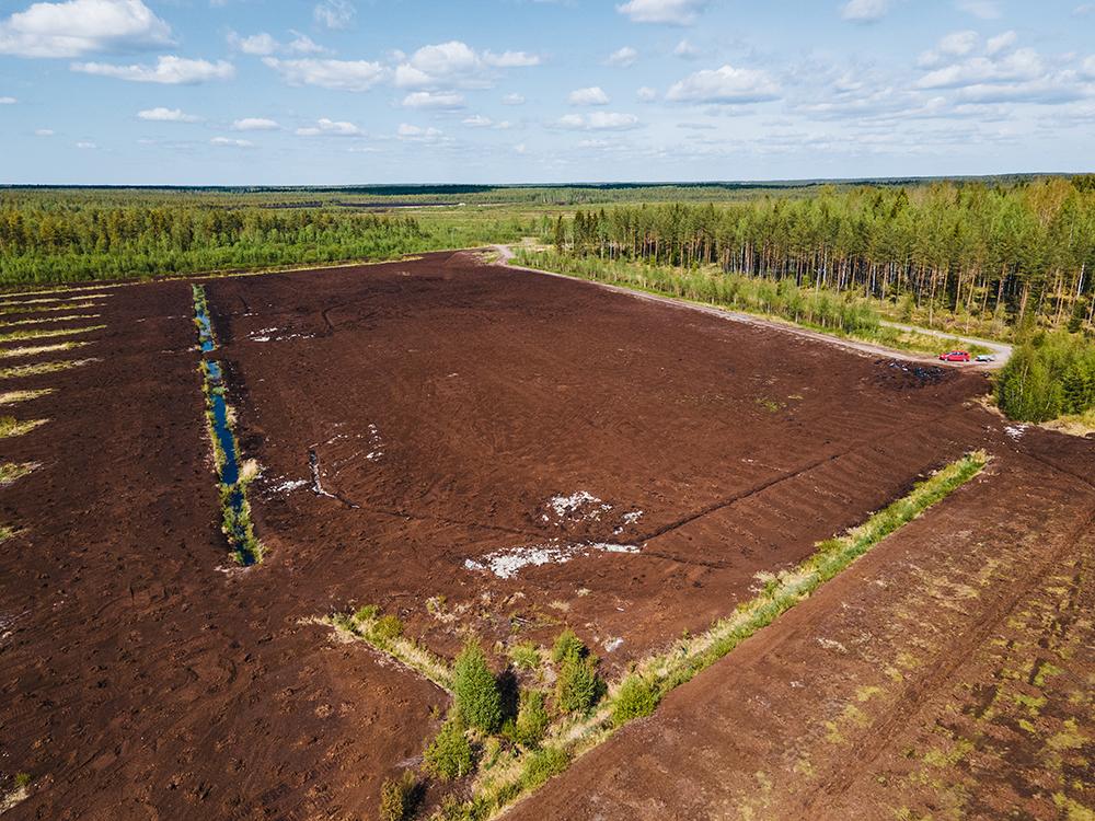 Akava-metsää istutettiin kesäkuun 2020 alussa Kärsämäelle Pohjois-Pohjanmaalle Silosaaren vanhalle turvetuotantoalueelle.